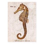 Seahorse del vintage - Seahorses antiguos Plantilla De Tarjeta De Negocio