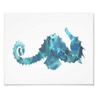 Seahorse Fotografías