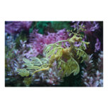 Seahorse Frilled amarillo Poster