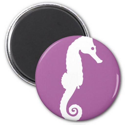 Seahorse - hippocampus imanes