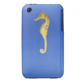Seahorse iPhone 3 Cover