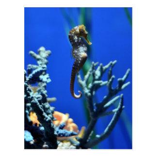 Seahorse Magic Postcard