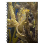 Seahorse mimético cuaderno