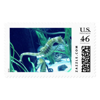 Seahorse Photo Postage Stamp