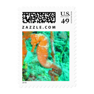 Seahorse postage stamp