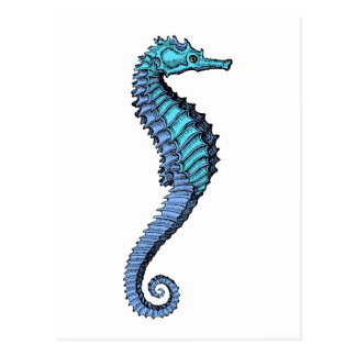 Seahorse Post Card