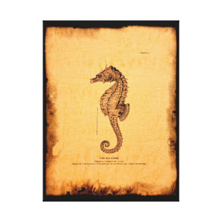 Seahorse Vintage Illustration Canvas Gallery Wrapped Canvas