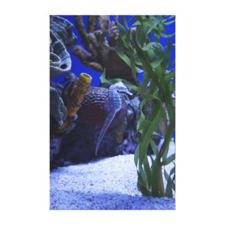 Seahorses Gallery Wrapped Canvas