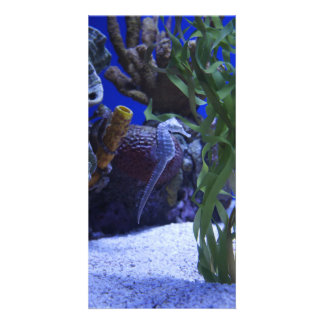 Seahorses Personalized Photo Card