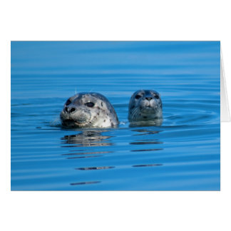 Seal and Pup Greetings Card Greeting Card