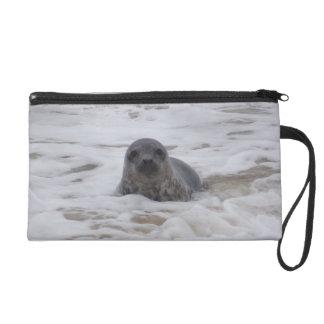 Seal - Animal Colour Photo Print Wristlet