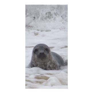 Seal - Animal Colour Print Photo Card