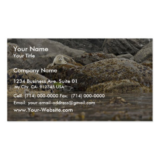 Seal at Peninsula Island Double-Sided Standard Business Cards (Pack Of 100)