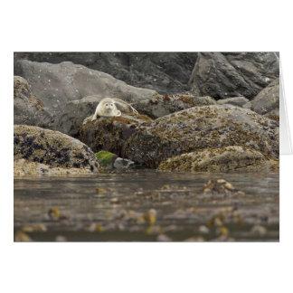 Seal at Peninsula Island Greeting Card