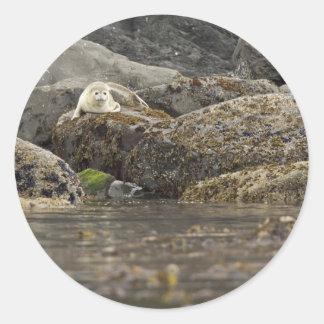 Seal at Peninsula Island Classic Round Sticker