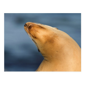 Seal at the beach postcard