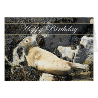 Seal, Atlantic Grey, Birthday Card
