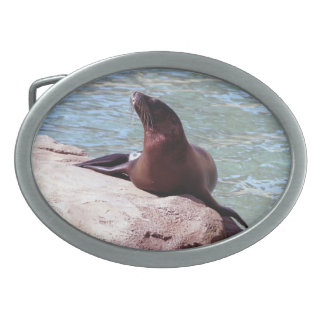 Seal Belt Buckles