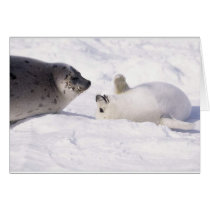 seal buddies