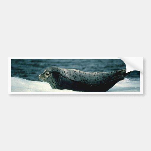 Seal Bumper Stickers