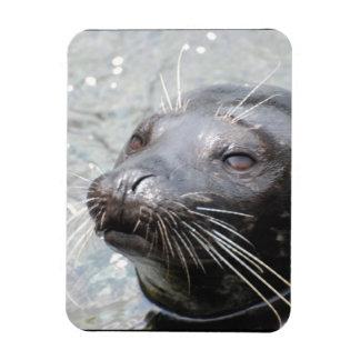 Seal Flexible Magnet Rectangular Magnets