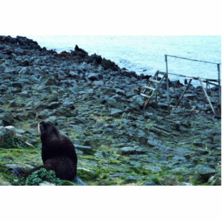 Seal Fur Photo Cut Out