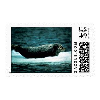Seal Harbor Postage