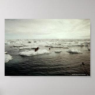 Seal Hunting in Barrow, Alaska Poster