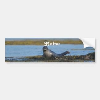 Seal in Casco Bay Maine Bumper Sticker