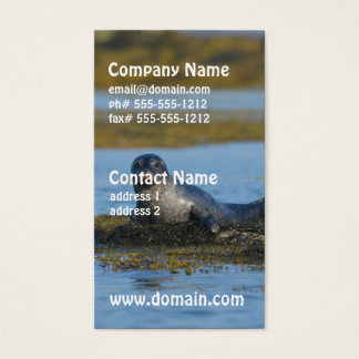 Seal in Casco Bay Maine Business Card