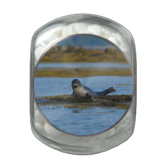 Seal in Casco Bay Maine Jelly Belly Candy Jar