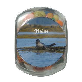 Seal in Casco Bay Maine Jelly Belly Candy Jars