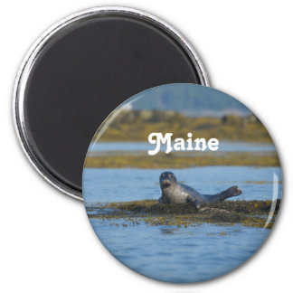 Seal in Casco Bay Maine Magnet