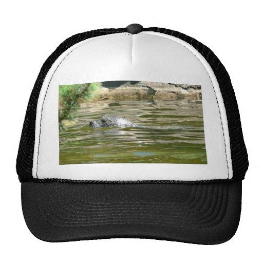 Seal In Water Trucker Hats