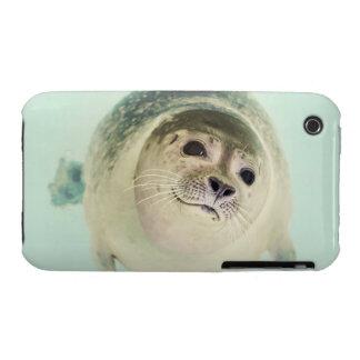 seal iPhone 3 case