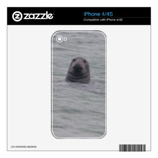 Seal iPhone 4/4s skin Skins For The iPhone 4