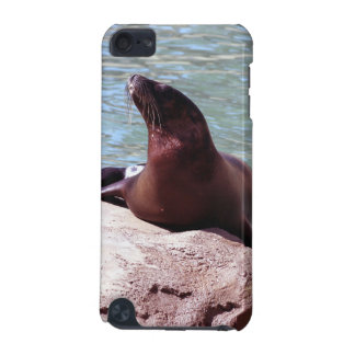 Seal IPod Touch Case