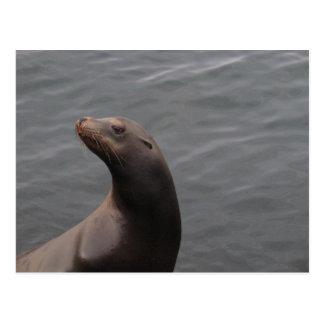 Seal - Montery Bay CA Postcard
