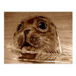 Seal Northsea Postcard