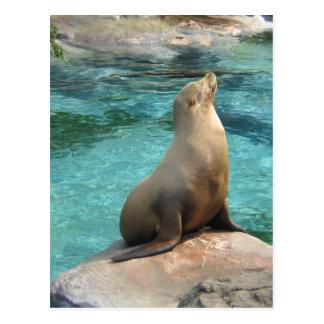 Seal on Rock Postcard