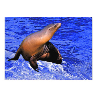 Seal on Rock with Deep Blue Sea Card