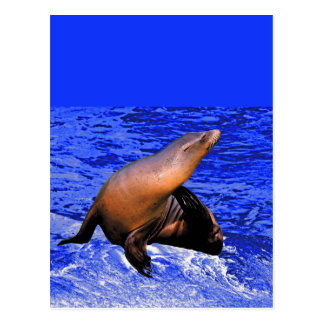 Seal on Rock with Deep Blue Sea Postcard