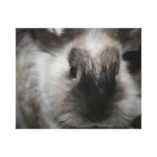 seal point rabbit head cute bunny photo gallery wrap canvas