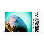 Seal Postage Stamp