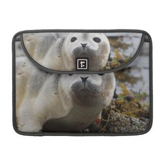 """Seal Pup 13"""" MacBook Sleeve Sleeves For MacBooks"""