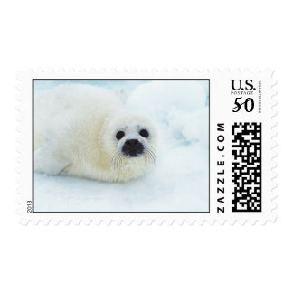 Seal pup baby cute animal in the snow postage