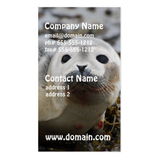 Seal Pup Business Cards
