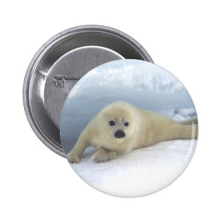 Seal Pup 2 Inch Round Button