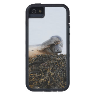 Seal Pup Cover For iPhone 5