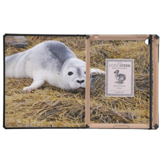 Seal Pup Covers For iPad
